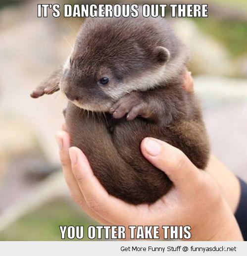 Otter Puns – Punpedia