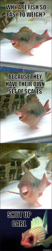 Fish have their own scales joke pun, meme