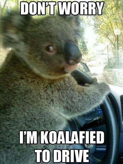 koalified, qualified, koala driving pun