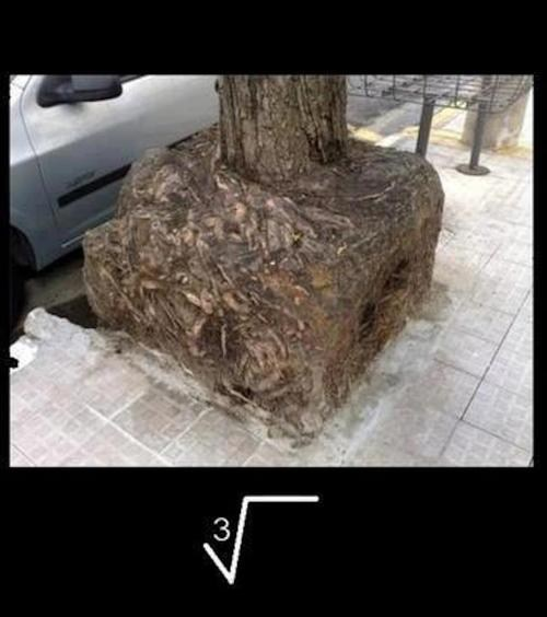 cube root tree pun