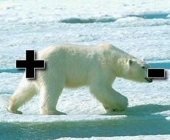 polar bear pun