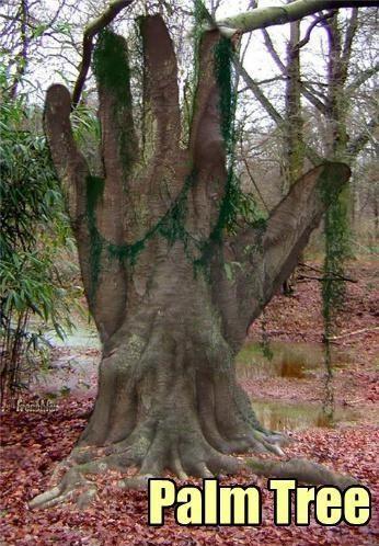 Tree Puns – Punpedia