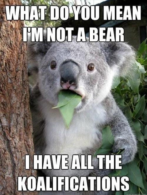 koala puns, qualifications, koalafications