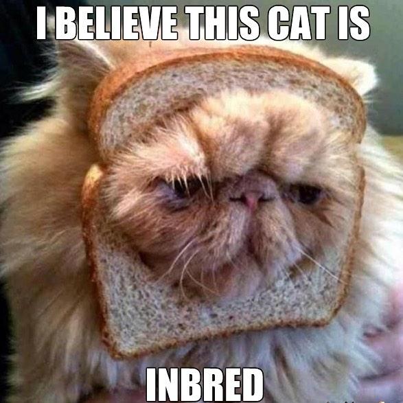 inbread cat pun