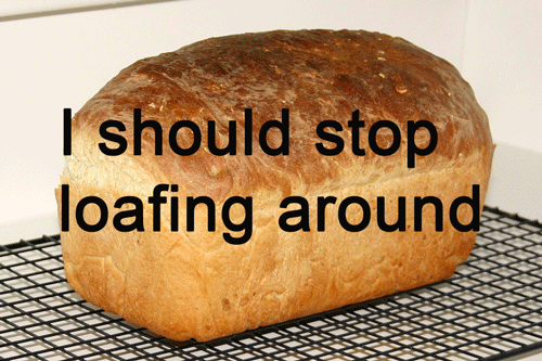 flirting meme with bread machines for women at home